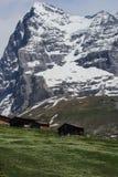 Bergwiese Lizenzfreies Stockbild