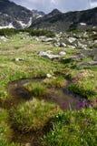Bergwiese stockbilder