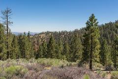 Bergwiese im staatlichen Wald Stockfotos