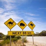 Berühmte australische Zeichen-Kamele Wombats Kängurus Stockfoto