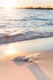 Bericht in abottle op strand met zonsondergang Stock Foto's