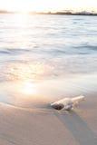 Bericht in fles op strand met zonsondergang en onduidelijk beeld de industriebackgro Stock Afbeeldingen