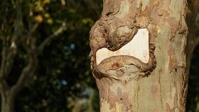 Berichtplaat op een boom royalty-vrije stock foto