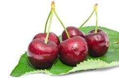 Beries большой зрелой вишни сочные сладостные влажные с падениями воды приносить Стоковые Изображения RF