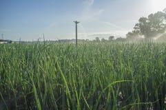 Berieselungsanlagen bei der Arbeit mit hintergrundbeleuchteten Sonnenstrahlen am Zwiebelfeld Guadiana-Wiesen, Badajoz, Spanien stockbilder