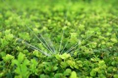 Berieselungsanlagen-Bewässerung lizenzfreies stockbild