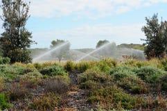 Berieselungsanlagen, die Garten mit Wasserspray wässern Lizenzfreie Stockfotos