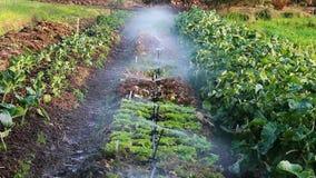 Berieselungsanlagen, die Wasser auf Reihe von Anlagen auf kleinem Bauernhof sprühen stock footage