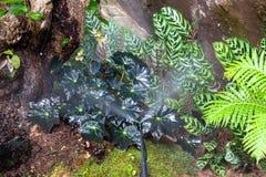 Berieselungsanlagen, die Wasser im Garten besprühen stockbild
