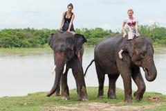 Berijd een olifant royalty-vrije stock afbeeldingen