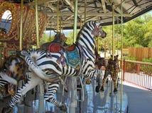Berijd een zebra Royalty-vrije Stock Foto