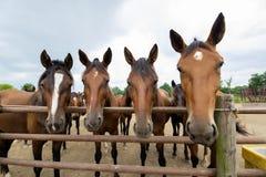 Berijdende paarden Stock Afbeeldingen