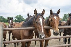 Berijdende paarden Royalty-vrije Stock Foto's