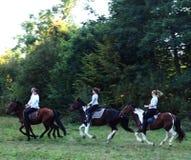 Berijdende Paarden Stock Foto