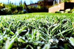 Berijpt groen gras Stock Fotografie