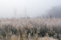 Berijpte Lange Grasprairie in Mist royalty-vrije stock fotografie