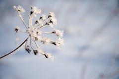 Berijpte naakte boomtak op de winterachtergrond stock afbeelding