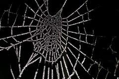 Berijpte-spinnenweb, bereiftes Spinnennetz stockfotografie