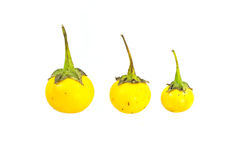 Beringela amarela pequena Imagens de Stock Royalty Free