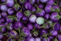 Beringela roxa crua orgânica fresca redonda do close-up no ` s março do fazendeiro Fotos de Stock