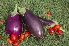 Beringelas e tomates Foto de Stock