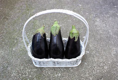 Beringelas frescas Fotografia de Stock Royalty Free