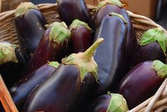 Beringelas frescas da exploração agrícola Foto de Stock Royalty Free