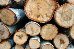 Berk-boom logboeken Stock Afbeeldingen