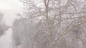 Berk in de sneeuw stock video