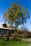 Berk en een boerderij in de lente Royalty-vrije Stock Fotografie