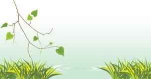 Berk en gras bij de rivier stock illustratie