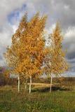 Berk herfst Zonweer De achtergrond van de aard Royalty-vrije Stock Afbeelding