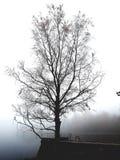 Berk in mistige ochtend royalty-vrije stock afbeelding