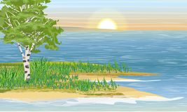 Berk op de bank van de rivier of het meer Het wild van Europa en Amerika royalty-vrije illustratie