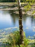 Berk op de kust van een meer met modder wordt behandeld die royalty-vrije stock foto's