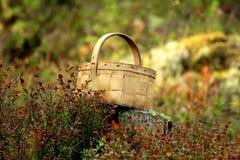 Berk-schors mand op een stomp in een bos in de zon` s stralen Royalty-vrije Stock Foto