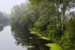 Berkbomen langs een rivier Mistig regenachtig weer Stock Foto