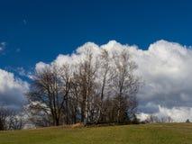 Berkbomen op een heuvel Stock Afbeeldingen