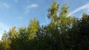 Berkboom & Haagdoorn onder een de Lentemaan 3 stock afbeelding