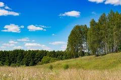 Berkbosje, gebied en blauwe hemel Stock Foto