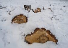 Berkbrandhout onder de onlangs gevallen sneeuw in Novosibirsk, Rusland stock foto