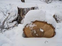 Berkbrandhout onder de onlangs gevallen sneeuw in Novosibirsk, Rusland stock foto's