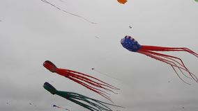 Berkeley festival of kites stock video footage
