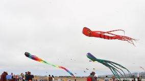 Berkeley festival of kites stock footage