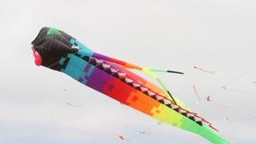 Berkeley festival of kites stock video footage