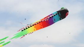 Berkeley festival of kites stock video