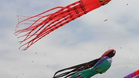 Berkeley festival of kites stock footage
