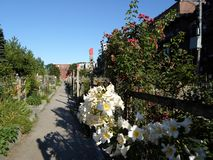 Berkeley Street Community Garden. The Berkeley Community Garden in Boston`s South End is one of the largest community gardens in the city royalty free stock image