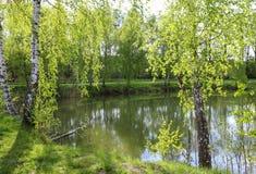Berken door het meer Stock Afbeeldingen