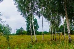 Berken op de rand van het gebied in het dorp r stock afbeeldingen